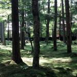 どこもこんな風景です。FM軽井沢からの提供です。さすがに緑がきれいです。